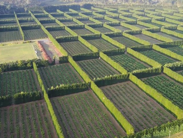 أحسن طريقة في العالم لحماية الزراعة من الرياح