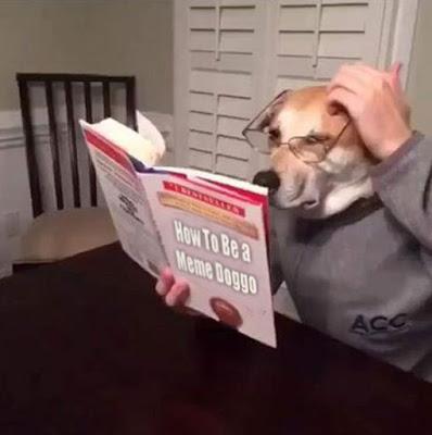 Dogecoin Meme Hund - lustige Bilder