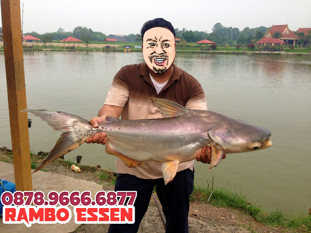 Rambo Essen Ikan Patin