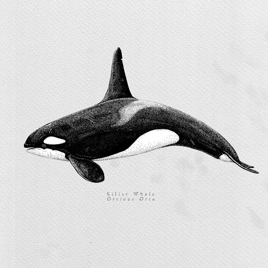 Orca Whale by Last Maps