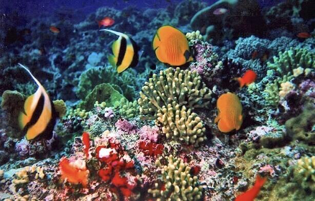 Pengertian ekosistem akuatik