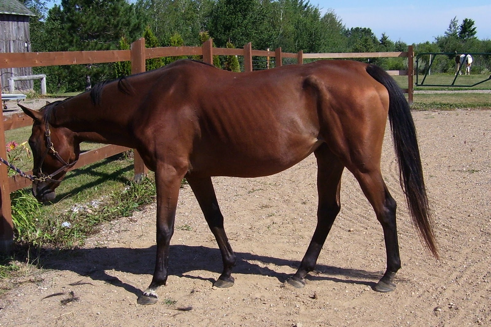 Royal Grove Stables Blog How To Know If Your Horse Too