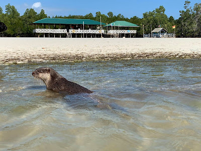 An otter hanging out at Matahum
