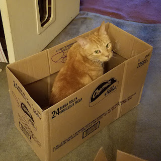 Boots the cat is in a box