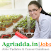 Research Fellow (Rs.25000/- plus HRA) Recruitment -Punjab Agricultural University
