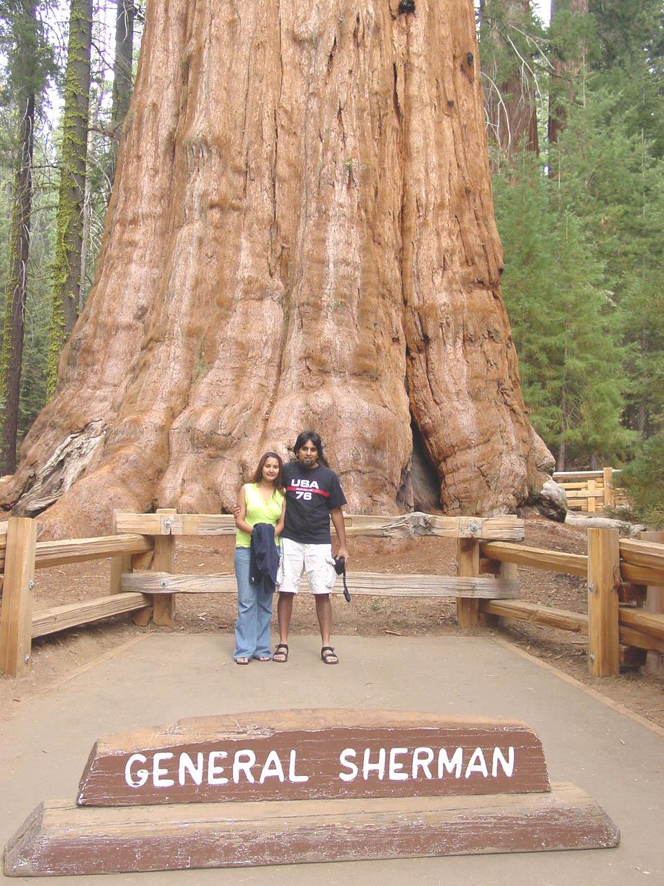 ... ini merupakan pohon-pohon yang memiliki ukuran paling besar di dunia