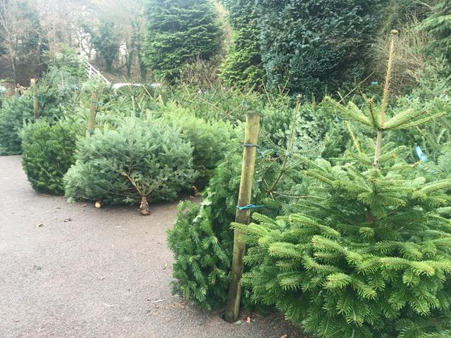 Delamere train station Christmas trees