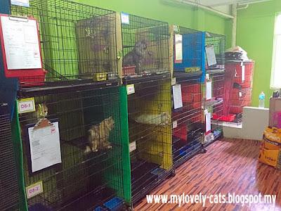cat room 4b
