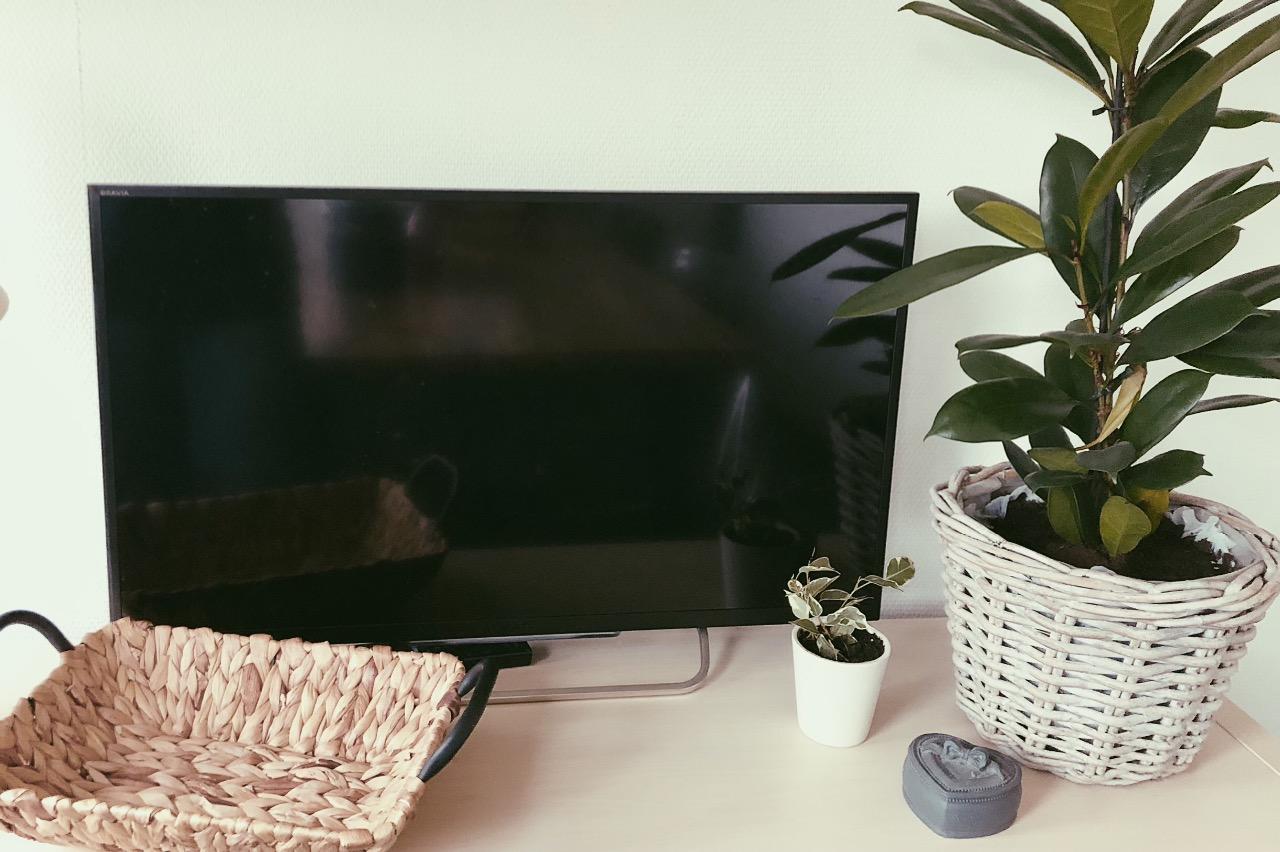 Haal meer groen in huis met PlantRebelz. Kamerplanten en stekjes uit hen eigen kassen.