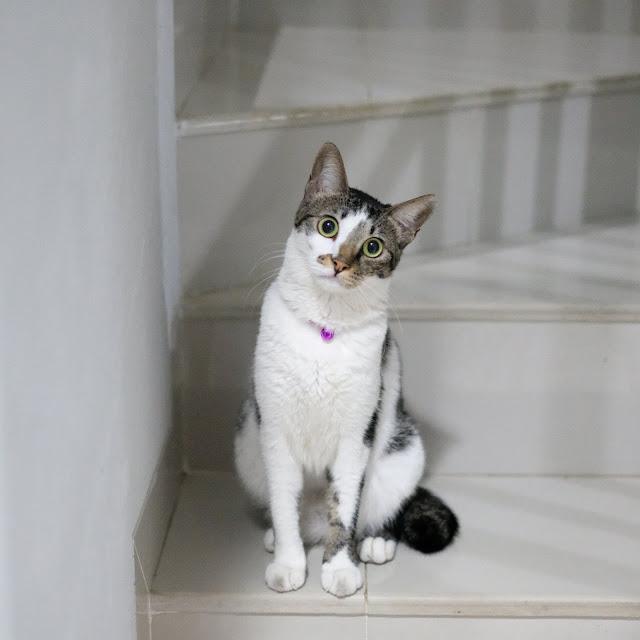 Kucing Rumah18M