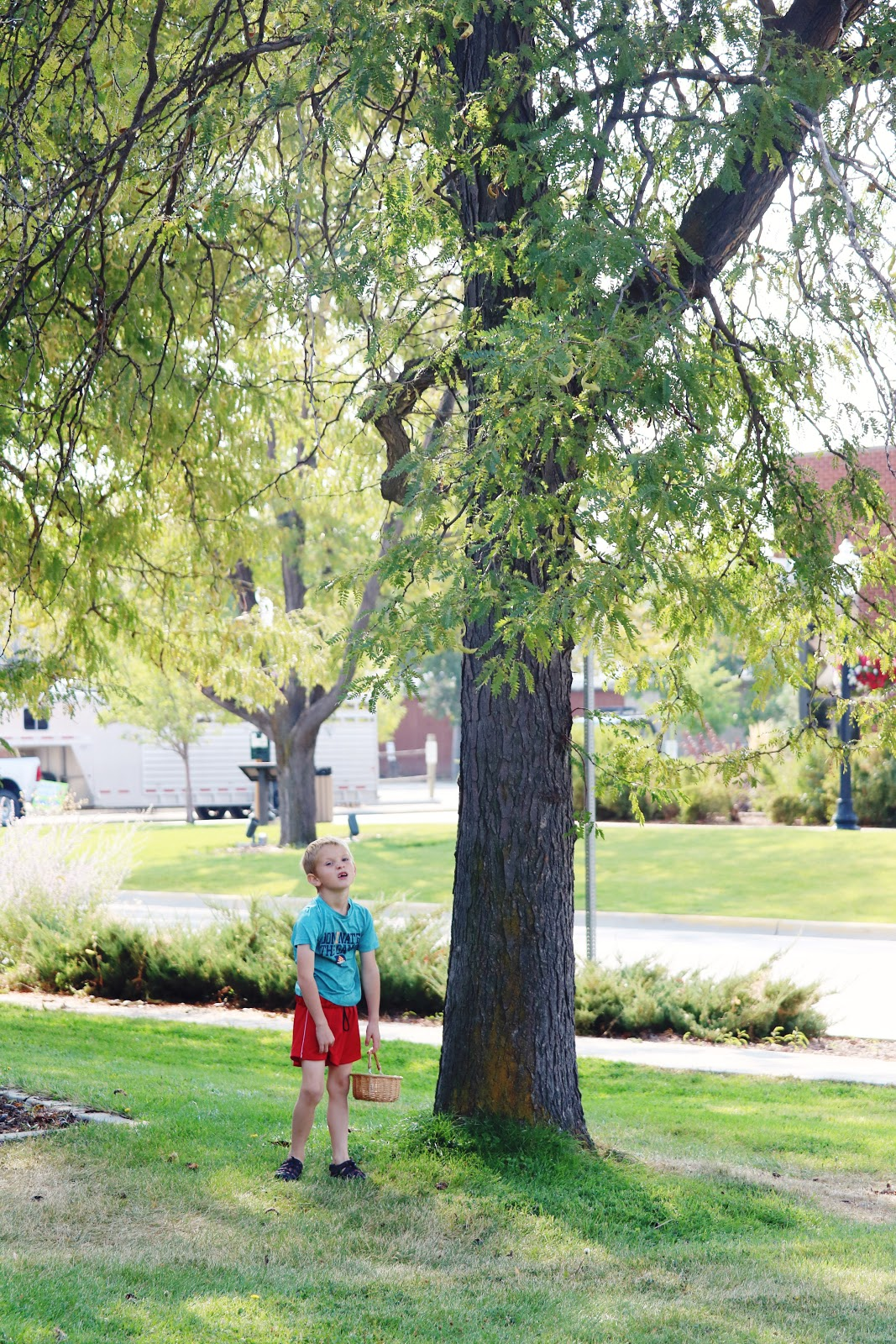 Exploring Nature With Children Diy Nature Explorer Packs: A Walk Around The Neighborhood To Collect Seeds
