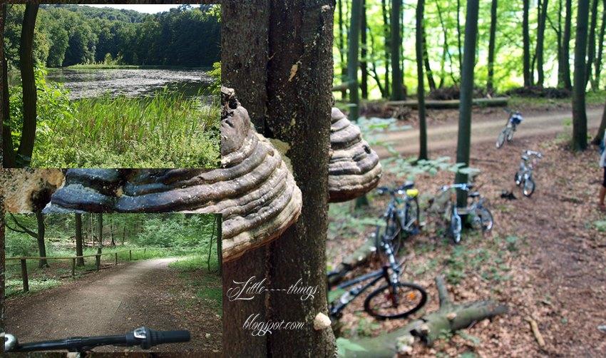 rowerem z dziećmi po Śląsku, rowerem z dziećmi po Jurze Krakowsko - Częstochowskiej, trasa dla wózków Śląsk Jura