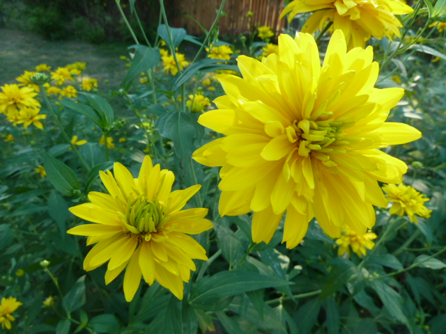 Green yellow flower names gardening flower and vegetables all yellow flowers names images flower decoration ideas mightylinksfo