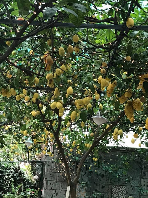 Lemons in Sorrento