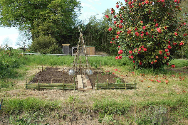 making a new organic garden using chickens and quail for pest control