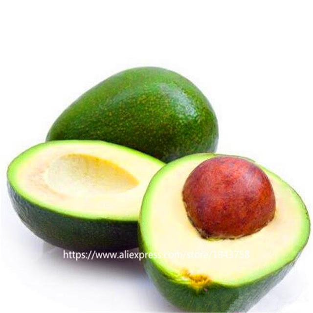 1 seed Rare Fruits seeds Persea americana Giant choquette Avocado Pear Grow