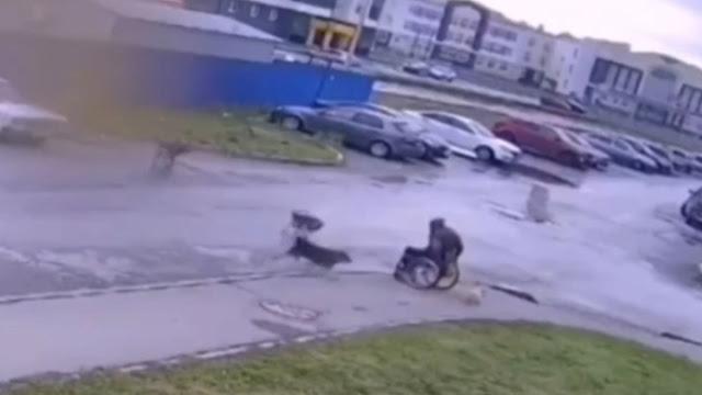 Инвалид-колясочник отбил своего мопса от напавшей на них стаи бродячих собак