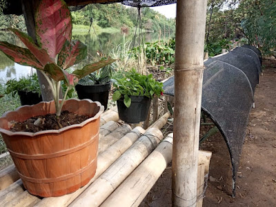 tanaman hias sebagai salah satu produk penjualan KAPORIT