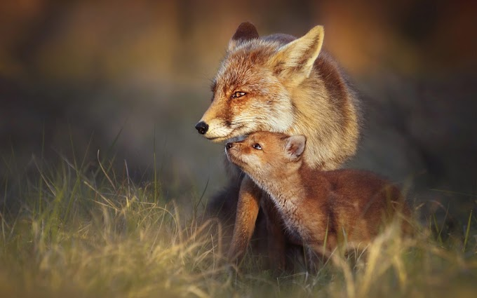Mama Fox with her Baby
