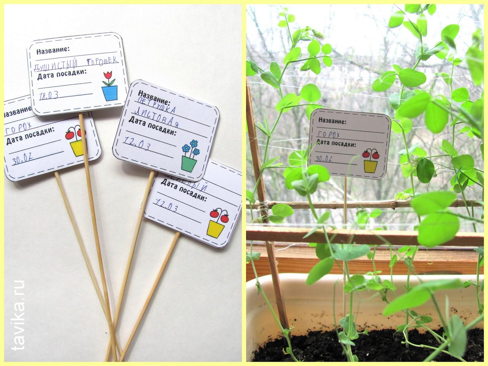 Как сделать лэпбук о растениях. Шаблоны