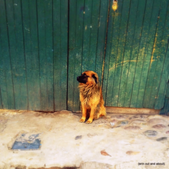 {ErinOutandAbout} The Beautiful Dogs of South America