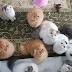 Ganswed Cat Vilage, Rumah Para  Kucing Yang Comel dan Lucu