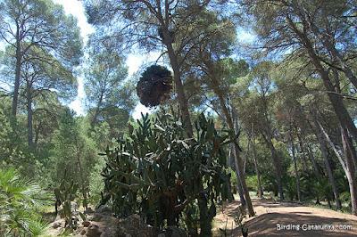 Cactus de grans dimensions