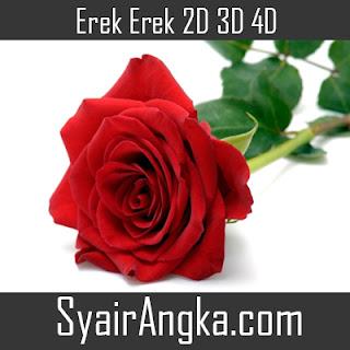 Erek Erek Bunga Mawar 2D 3D 4D