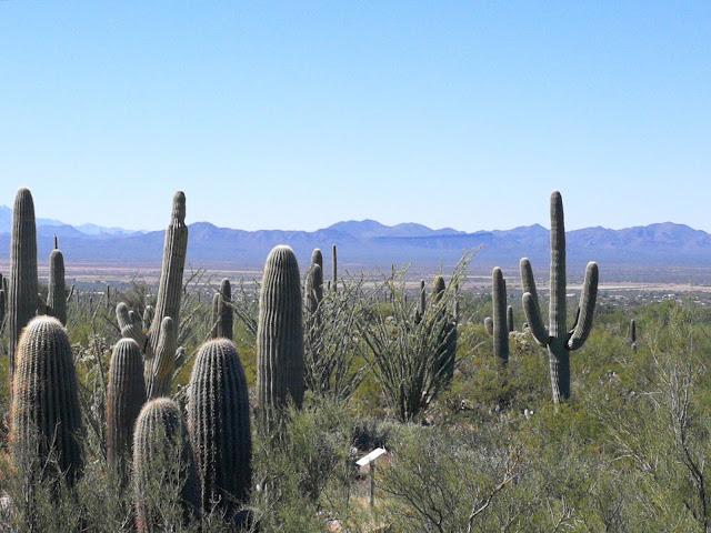 parco dei cactus saguaro arizona