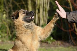 Factores que contribuyen al éxito del entrenamiento de tu perro