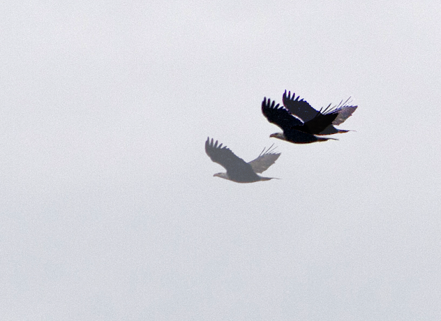 Soaring Eagle seen through cataract eyes