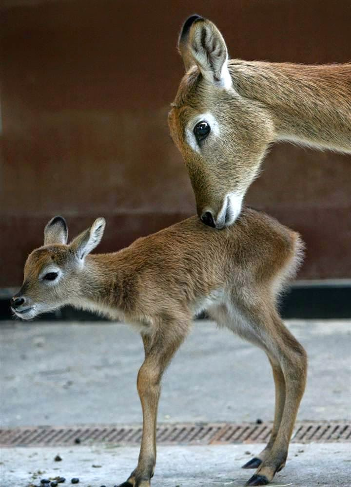 10 of the World's Most Famous Zoos - Berlin Zoo, Germany