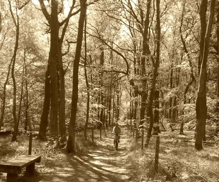 Bike ride through woods