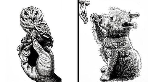 00-Animal-Drawings-Tim-Rees-www-designstack-co