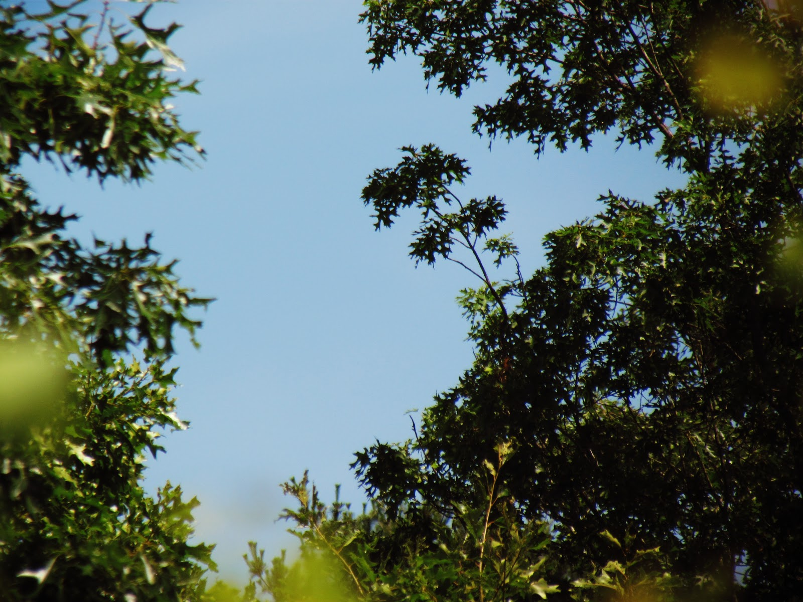 A group of trees in an emerald green forest reaching for the blue skies and gathering courage