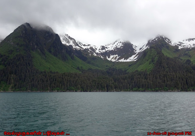 Resurrection Bay - Kenai Fjords National Park