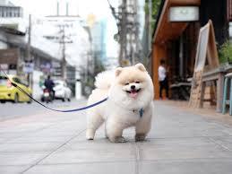 Consejos para vivir en la ciudad con un perro