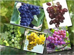 Buah2an yang dicurigai dimakan oleh Adam & Hawa....!!! | http://poerwalaksana.blogspot.com/