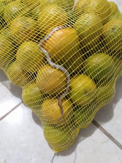 Mulher encontra cobra em saco de laranja comprado em rede atacadista de Mogi: 'Gritei muito'