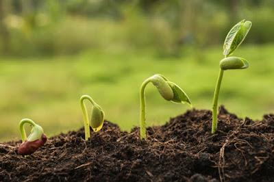 Evolusi Pada Tumbuhan Berbiji