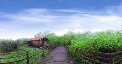 Hutan Mangrove Cantik