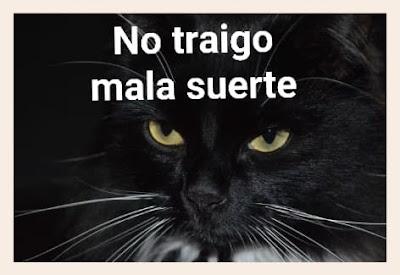 Los gatos negros no traen mala suerte