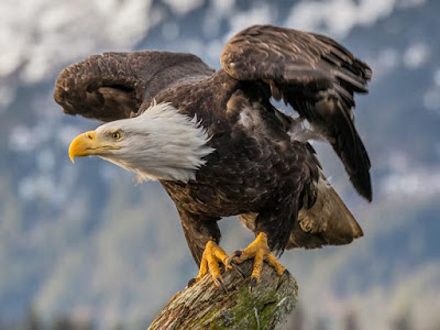 The Eagle Bird Never closes Its Eyes, watch This Wonderful Video