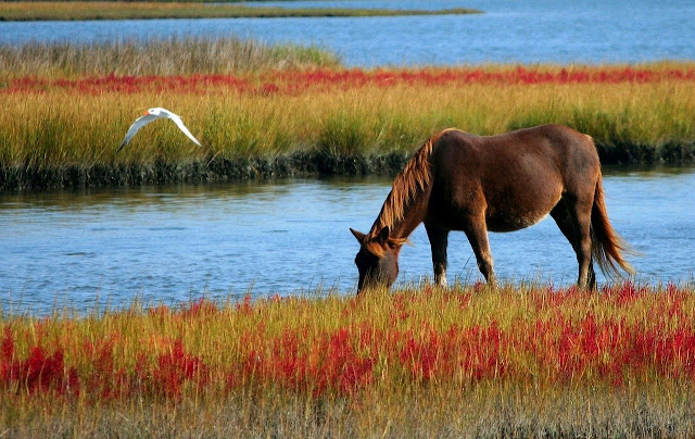 أجمل خلفيات خيول وأحصنة