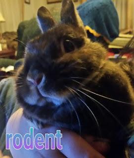 clover bunny 4