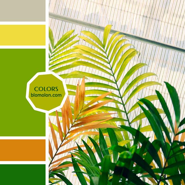 variedad_en_color_moodboard_88