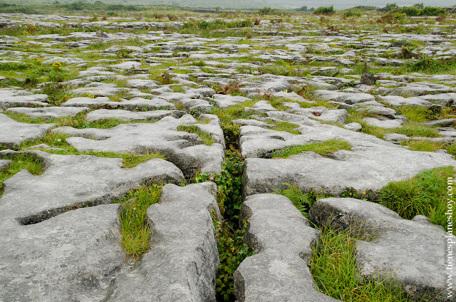 The Burren Grinks Irlanda Condado Clare