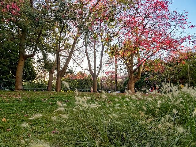 Arboles en flor en el parque Las Heras.CABA