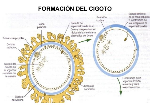 Diccionario Digital De La Clase Biologia