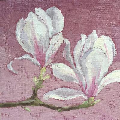 #66 'Magnolia' 6×6″